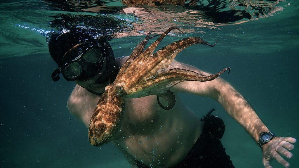 Questa immagine ha l'attributo alt vuoto; il nome del file è my-octopus-teacher-oscars-noms-2021.jpg